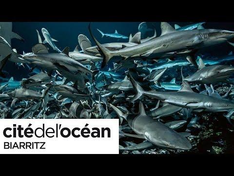 Cité de l'Océan : 700 requins dans la nuit