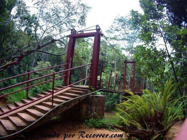 Sri lanka Srilanka rainforest sinharaja bosque tropical viajes lluvia mundo recorrer