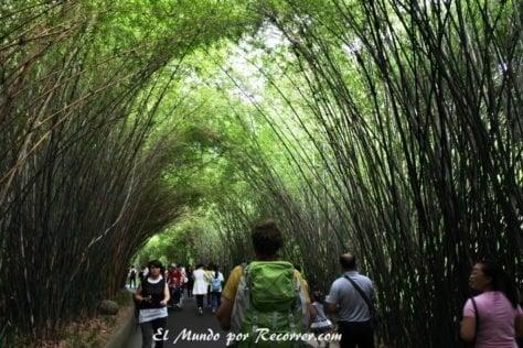 Caminos entre bambú