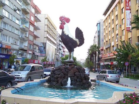 denizli gallo rooster canto largo turquia turkey el mundo por recorrer