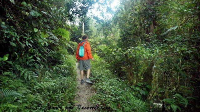 Cameron Highlands junggle trekking trail