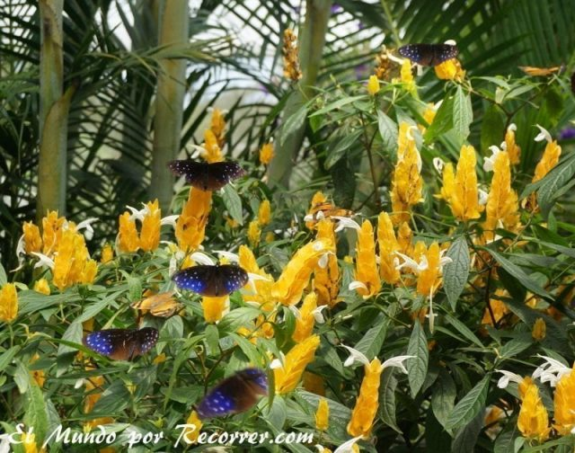 Cameron Highlands mariposas mariposarium