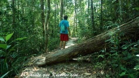 Penang parque nacional trekking