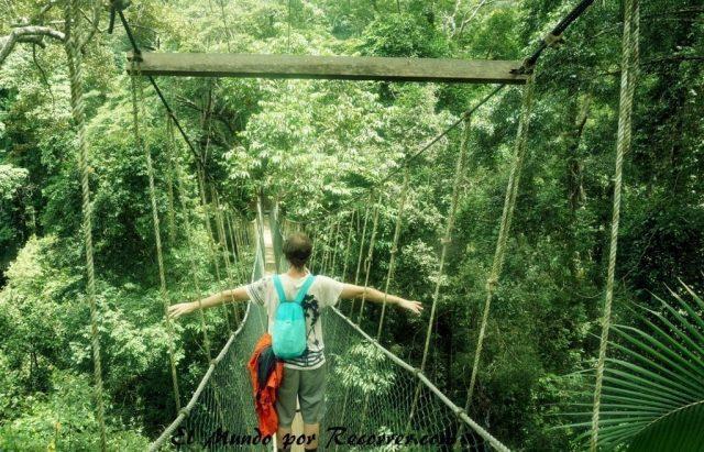 Taman Negara canopy walk puente