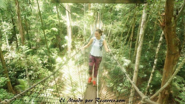 Taman Negara canopy walk puente colgante