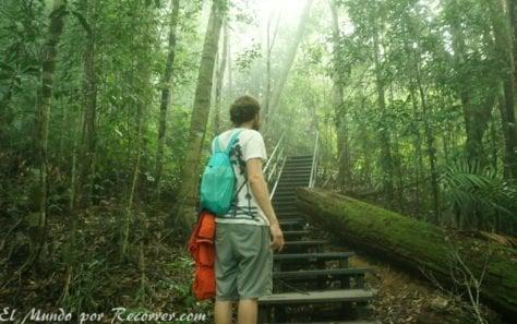 Taman Negara trail selva
