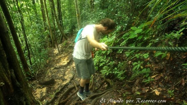 Taman Negara trail selva cuerda fija