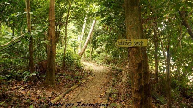 islas perhentian malasia rainforest camping camino