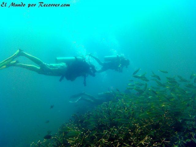 islas perhentian malasia scuba diving peces