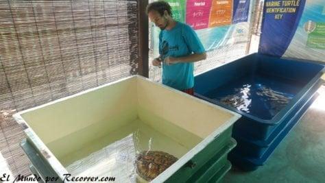 penang malasia torttle santuario tortugas