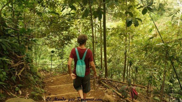 selva cerca del volcan ijen