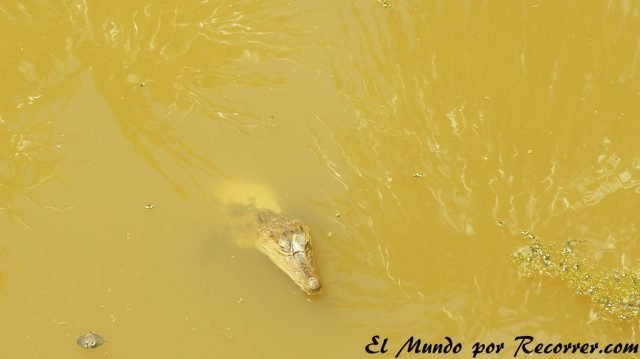 puerto nariño colombia caiman low