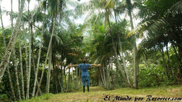 puerto nariño colombia palmeras low
