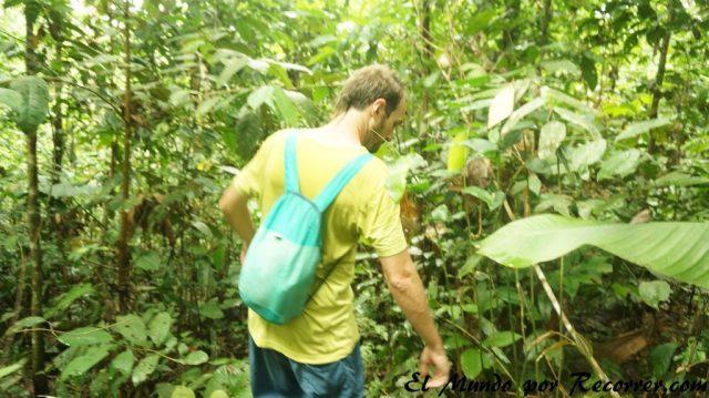 puerto nariño colombia trekking por la selva low