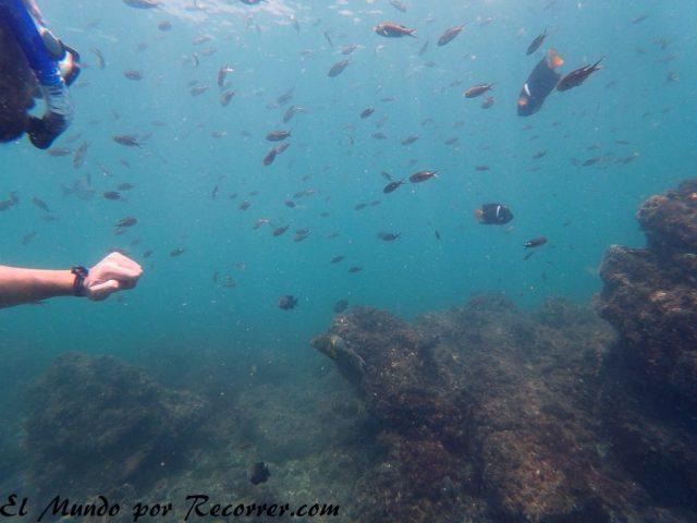 snorkel en isla tortuga costa rica cerca de Montezuma
