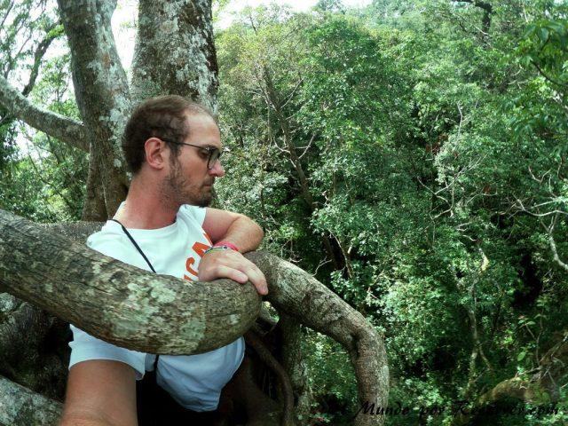 Monteverde San Carlos Costa Rica ficus gigante
